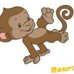 Alex the Monkey from Rearz Safari